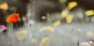 «Зезагин курс» - авторский альбом Увайса Шарипова